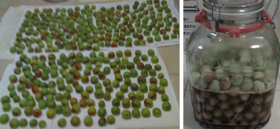 綠酵素DIY,養生自己來+豆粉優格面膜 + ( 納豆的好處 ...