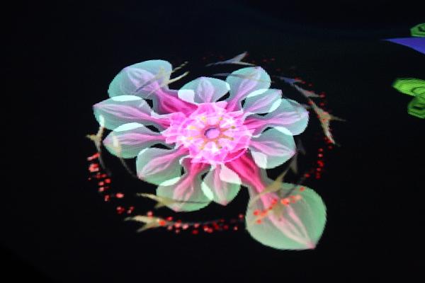 我的夢想之花尋覓紀 ----夢想之花
