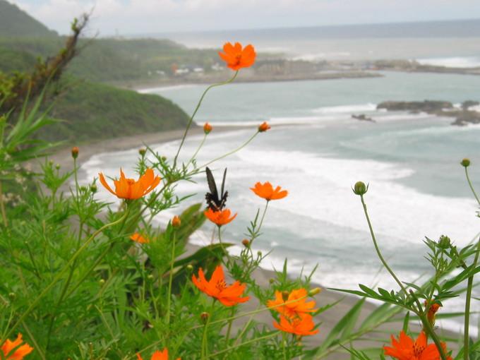 花東海岸的小花