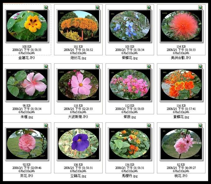 四季花卉精選