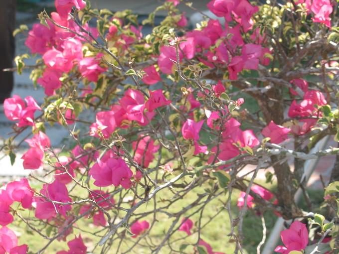 走馬瀨農場內之花-1