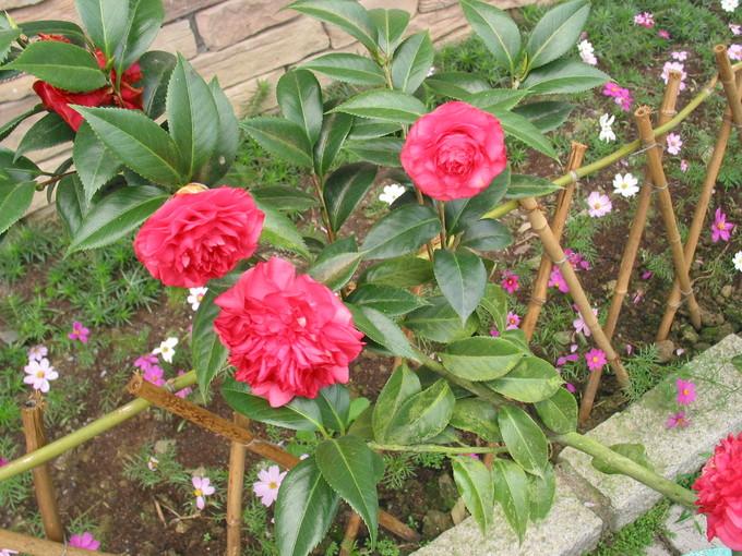走馬瀨農場內之花-5