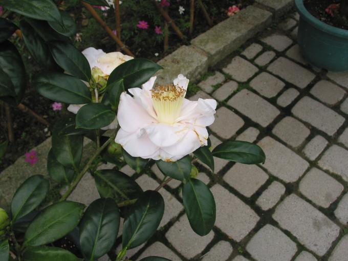 走馬瀨農場內之花-6