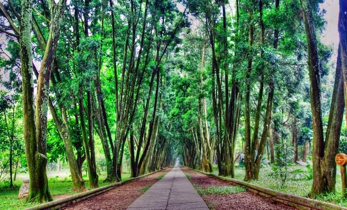 960914遊歷竹山台大熱帶植物園