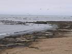 加州 Año Nuevo 州立 象海豹 保護區 2