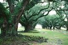 美國紐奧良密西西比河畔Ork Plantation 橡樹園農莊,2006
