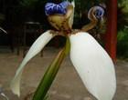 美豔花朵下--隱藏殺機