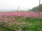 走馬瀨農場內之花-4