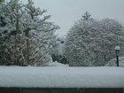 春節溫哥華雪景